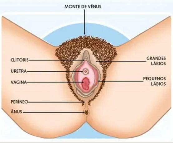 Dra Claudiani fala sobre o aparelho genital feminino